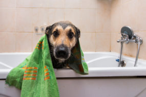 Pet smells can affect property values