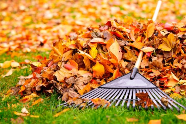 Tidy up Autumn leaves with a rake when selling your home
